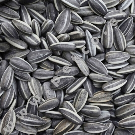 USA Sunflower Seed