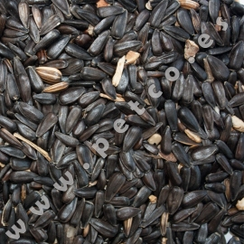 Spanish Sunflower Seed